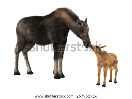 3D digital render of a female moose and a calf isolated on white background - stock photo