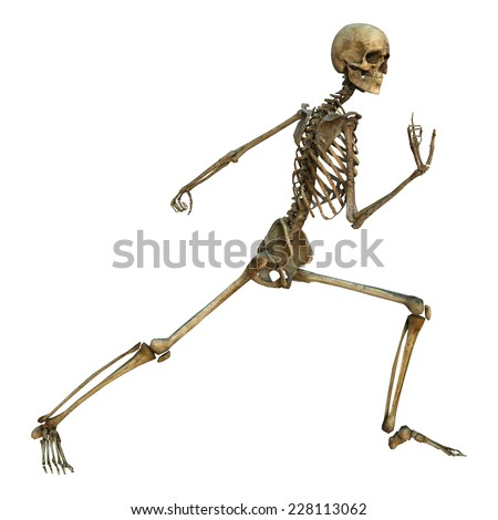 3D digital render of a human skeleton in a baji quan martial arts position isolated on white background - stock photo