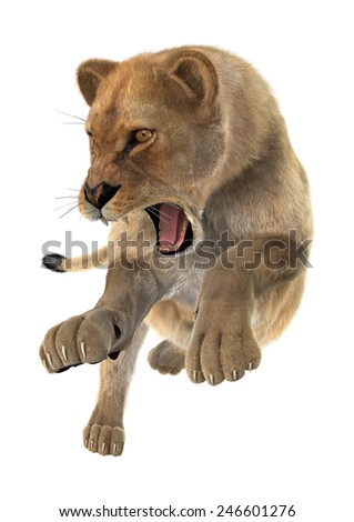 3D digital render of a hunting female lion isolated on white background - stock photo