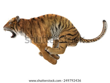 3D digital render of a jumping roaring tiger isolated on white background - stock photo