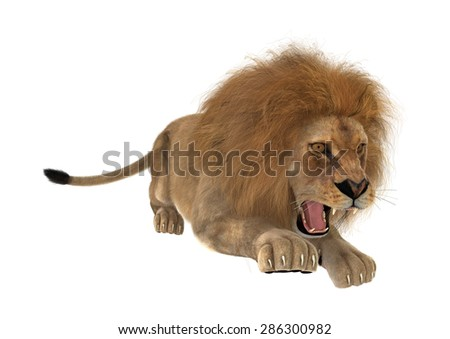 3D digital render of a male lion hunting isolated on white background - stock photo