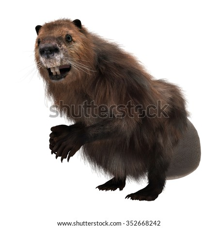 3D digital render of a North American beaver isolated on white background