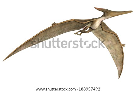 3D digital render of a prehistoric flying reptile Pteranodon isolated on white background - stock photo