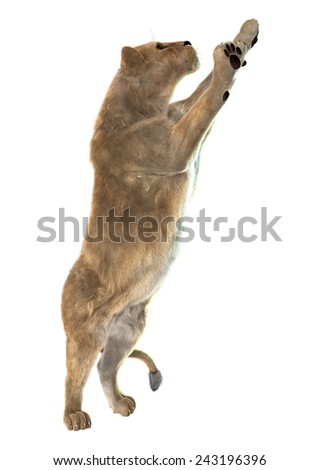 3D digital render of a standing lioness isolated on white background