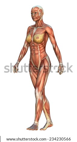 3D digital render of a walking female figure with muscle maps position isolated on white background