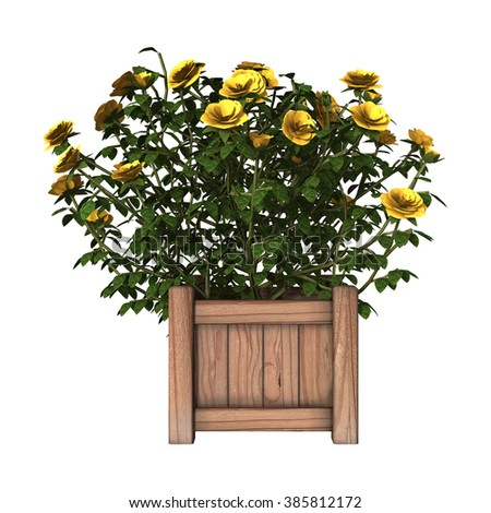 3D digital render of a yellow rose bush isolated on white background