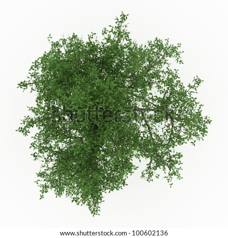 3d English Oak  tree isolated over white - stock photo