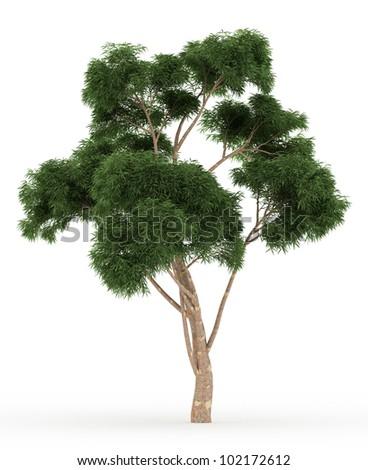 3d Eucalyptus tree isolated over white - stock photo