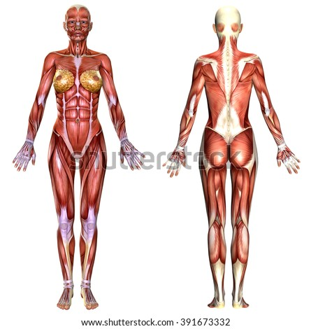 female anatomy photos
