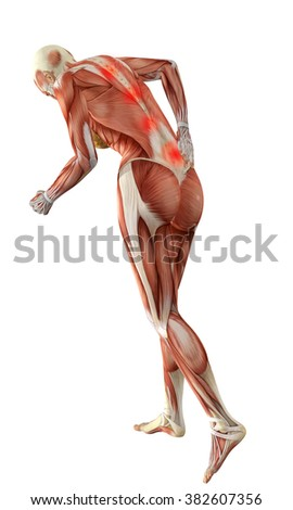 yoga pose with muscles pdf