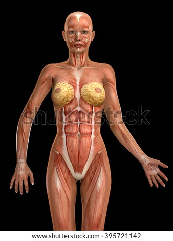 3D female medical figure illustration isolated on black backgrund