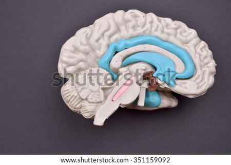 3D human brain model from external on purple background - stock photo