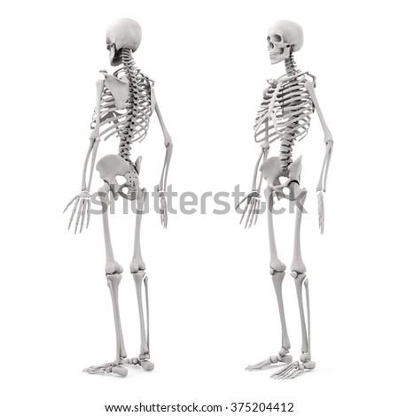 3d human skeleton on white background - stock photo