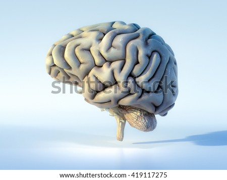3 d illustrated detailed view human brain stock illustration 3d illustrated detailed view of the human brain left view ccuart Choice Image