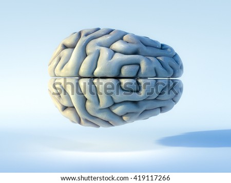 3D illustrated detailed view of the human brain. Top view. - stock photo