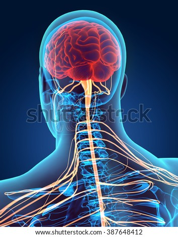 3D illustration male nervous system, medical concept. - stock photo
