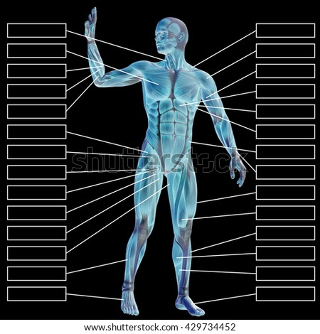 3D  illustration of a concept male human anatomy, a man with muscles and textbox isolated on black for body, tendon, fit, builder, strong, biological, skinless, shape, muscular, posture health medical