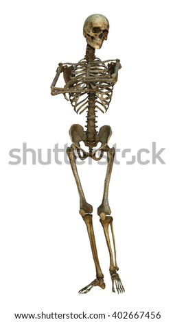 3D Illustration of a human skeleton isolated on white background