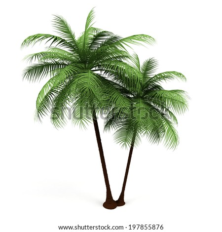 3d Illustration of a Palm Tree  - stock photo