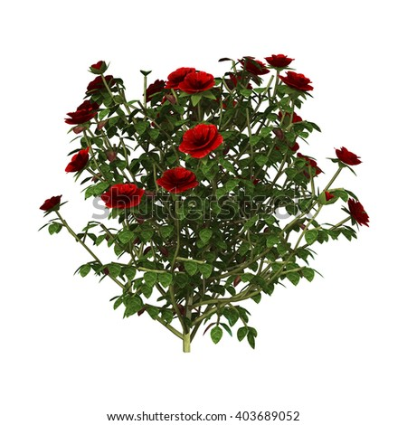 3D illustration of a red rose bush isolated on white background