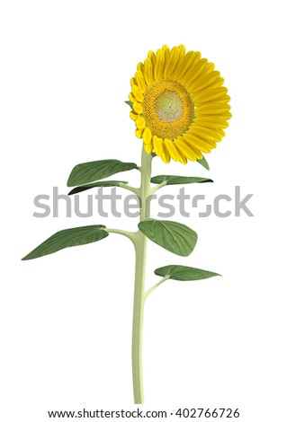 3D Illustration of a sunflower isolated on white background