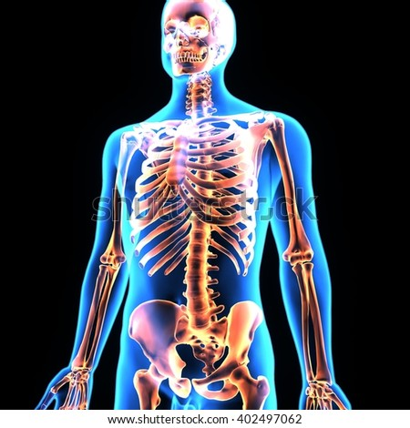 3d illustration human body organs skeleton stock illustration, Skeleton