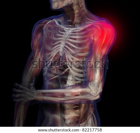 3D illustration of human male anatomy and skeleton. Shoulder pain. - stock photo