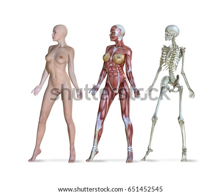 3d Illustration Female Anatomy Three Different Stock Illustration