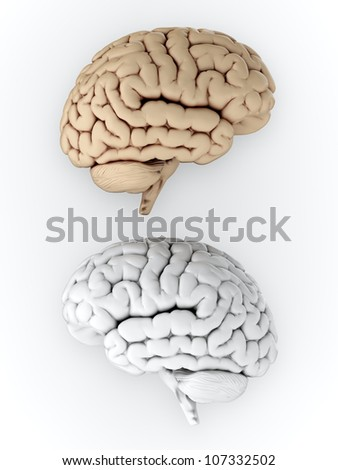 3D illustration of white and brown human brain on white background - stock photo
