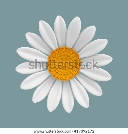 3D Illustration of  White daisy flower front view on green pastel color background or isolated, Virtual Rendering.