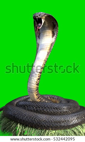 3d king cobra the worlds longest venomous snake isolated on green background king cobra snake