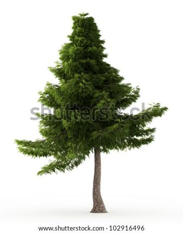 3d Lebanon cedar tree isolated over white - stock photo