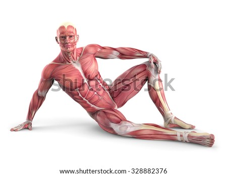 3d male muscular anatomy isolated on white background - stock photo