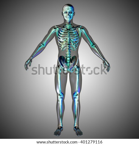 3d medical male skeleton with body silhouette