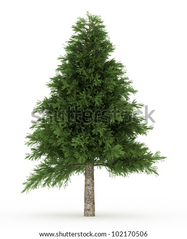 3d Pine  tree isolated over white - stock photo