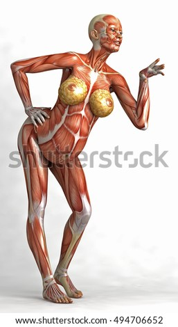 3 D Pregnant Woman Muscles Skin Standing Stock Illustration ...