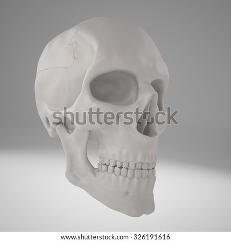 3D projected realistic human scull - stock photo
