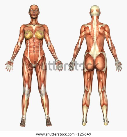 3D render depicting human anatomy - muscles - female - stock photo