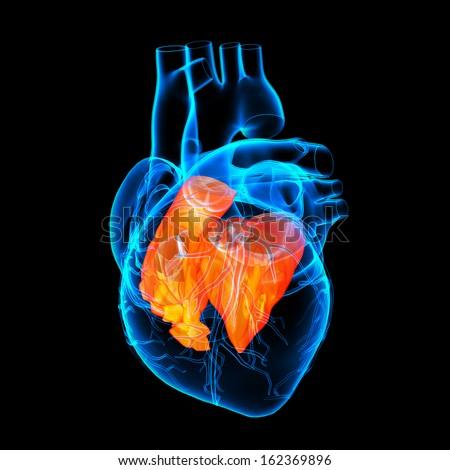 3d render Heart atrium - side view - stock photo