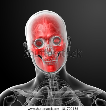 3d render human skull anatomy - close up - stock photo