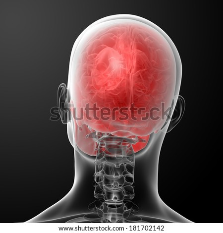 3d render human skull anatomy - top view - stock photo