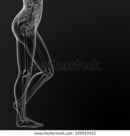 3d render illustration of the female anatomy - side view - stock photo