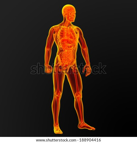3d render illustration of the male anatomy - front view - stock photo