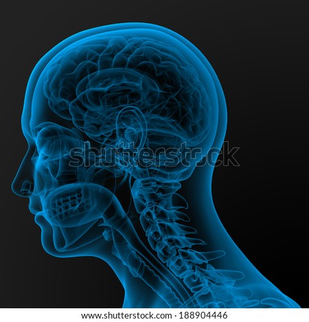 3d render illustration of the male anatomy - side view - stock photo