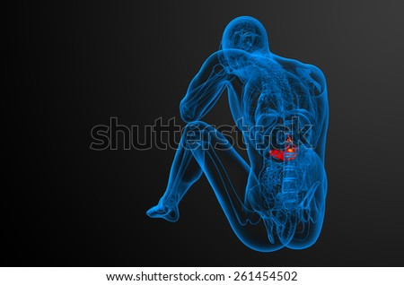 3d render medical illustration of the gallblader and pancrease - back view