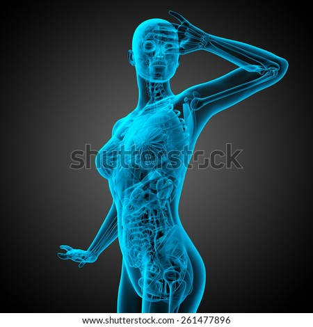 3d render medical illustration of the human anatomy - side view