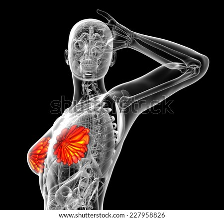 3d render medical illustration of the human breast - side view