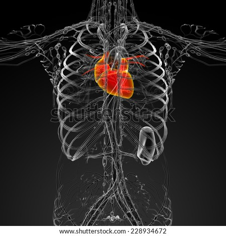 3d render medical illustration of the human heart - front view