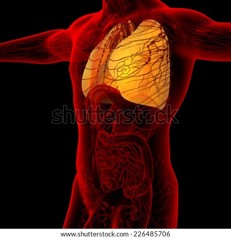 3d render medical illustration of the human lung - side view - stock photo