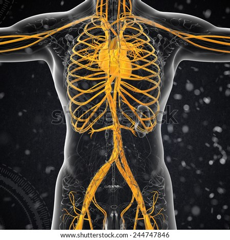 3d render medical illustration of the human vascular system - front view - stock photo